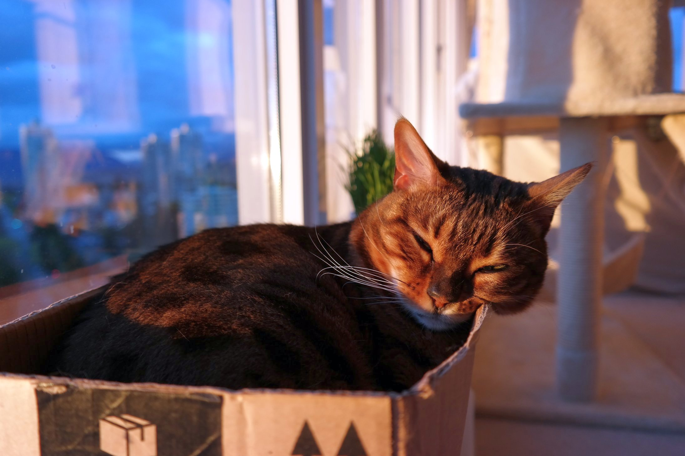 Happy Emma sleeping in her favorite studio apartment